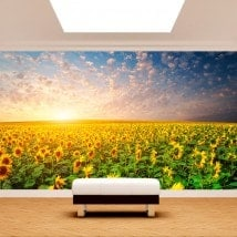 Photo wall murals sunflowers