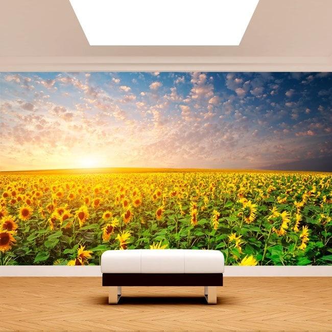 Photo wall murals sunflowers