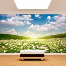 Photo wall murals flowers white daisies