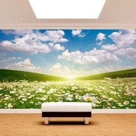 Photo wall murals flowers Daisy white