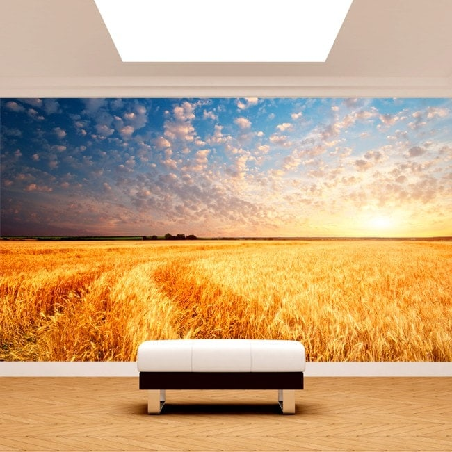 Photo wall murals sunsets in the field