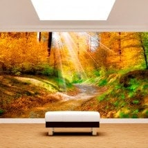 Photo wall murals trail in nature