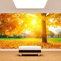 Photo wall murals trees in autumn