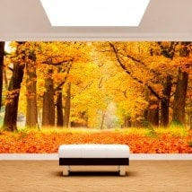 Photo wall murals trees autumn