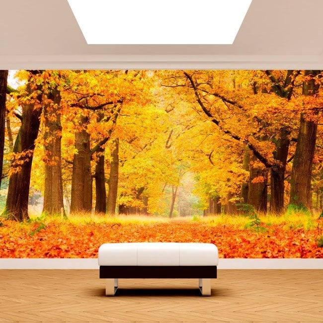 Photo wall murals trees autumn