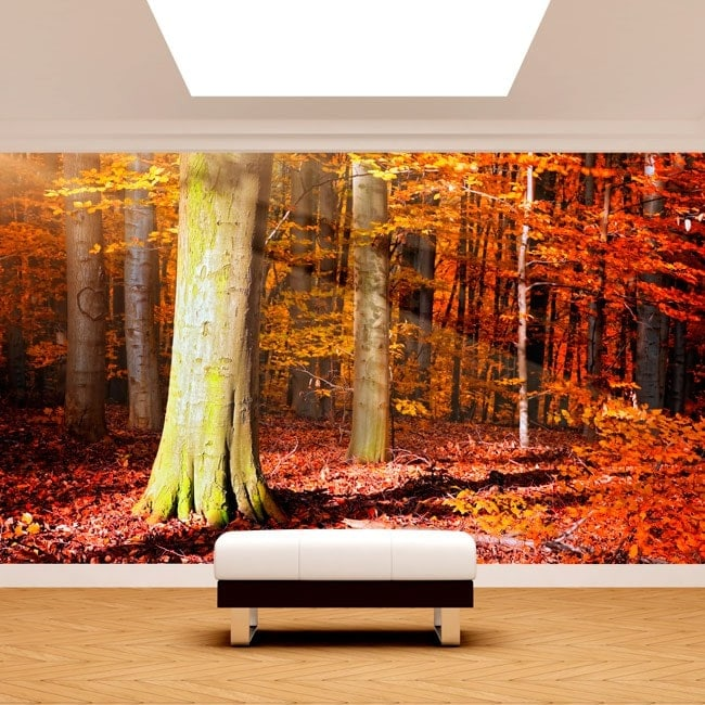 Fotomural trees autumn