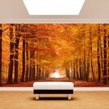 Photo wall murals road and trees autumn