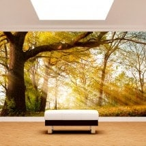 Photo wall murals tree nature