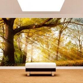 Photo wall murals tree nature