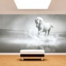 Fotomural. white horse