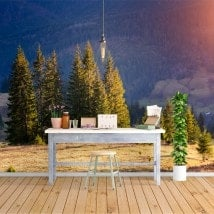 Photo wall murals nature pine