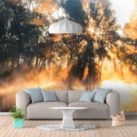 Photo wall murals rays of Sun on the river