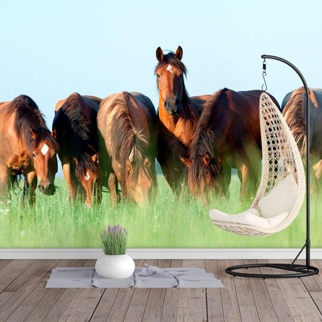 Vinyl photo murals horses in the field