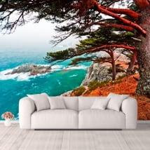 Wall murals cedar tree Rocky Island