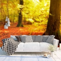 Wall mural trees in the autumn forest