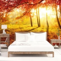 Wall murals sunset trees autumn