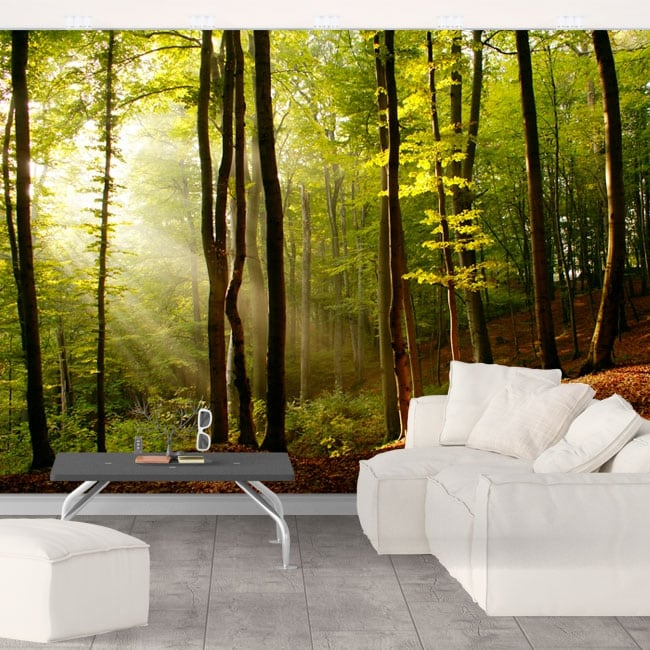 Wall mural trees forest sunset