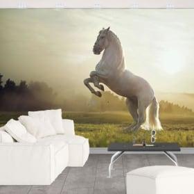 Wall murals vinyl white horse