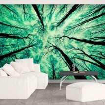 Wall murals forest trees