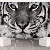Vinyl mural tiger