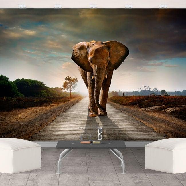 Vinyl wall murals elephant