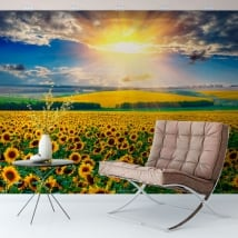Wall mural sunset field of sunflowers