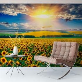 Wall mural sunset field of sunflowers