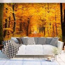 Vinyl murals trees in autumn