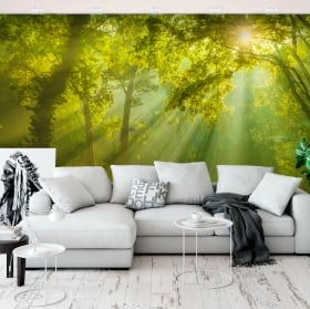 Wall murals of vinyl trees in the forest