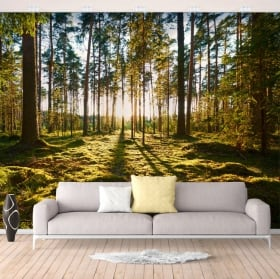 Wall murals of vinyl sunbeams in the forest
