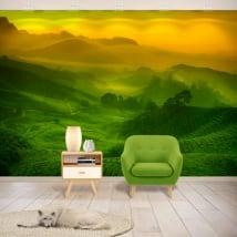 Vinyl wall murals malaysian tea plantation