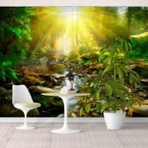 Vinyl murals sunset river in the forest