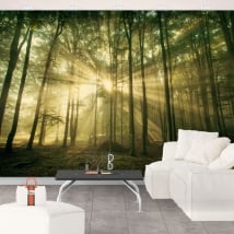 Vinyl wall murals sun rays and trees in autumn