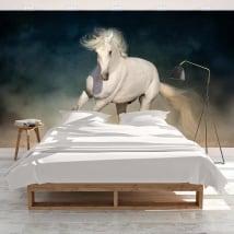 Adhesive murals white horse