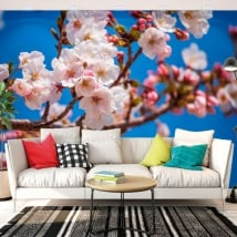 Wall mural japanese cherry blossom